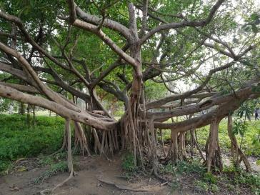 Tree in Daan Park